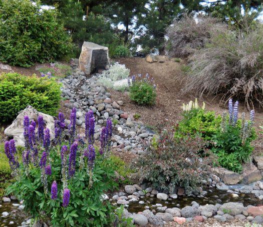 Mendels garden lupine flowers
