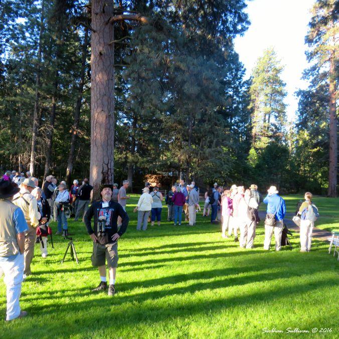 Dean Hale Woodpecker Festival, 4 June 2016