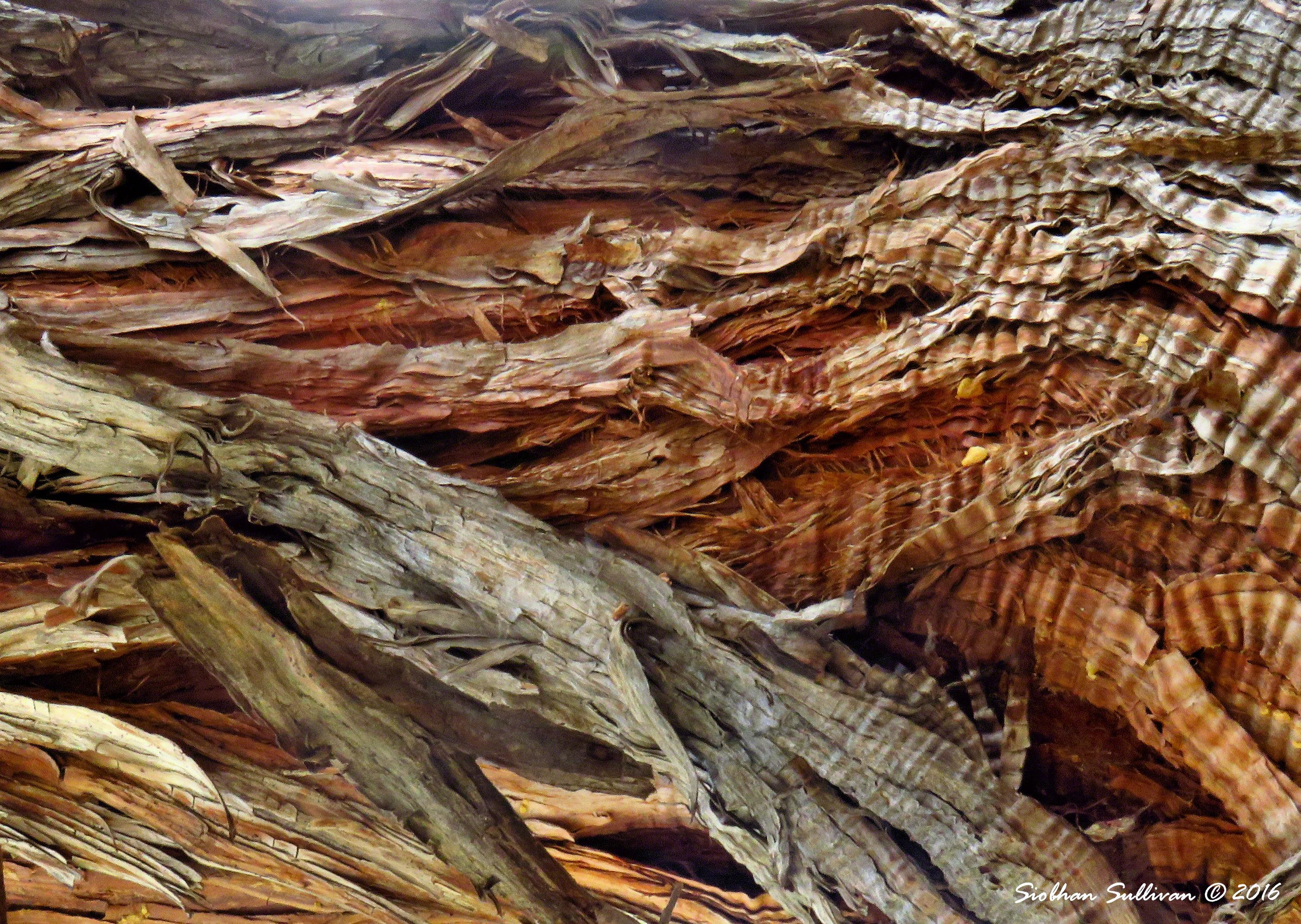 Close-up of juniper bark