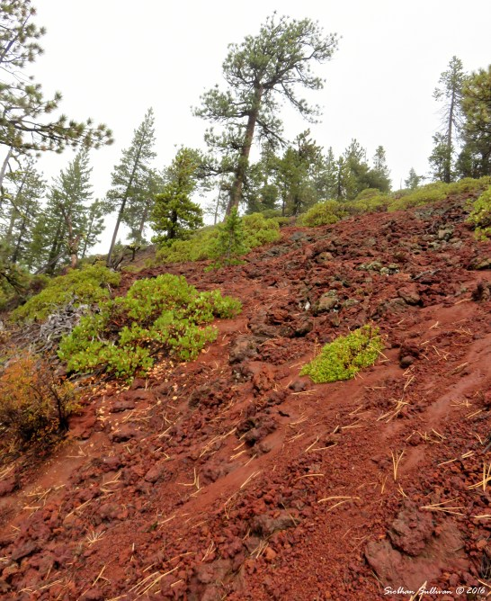 Paulina Lake Volcanic soil 4Oct2016