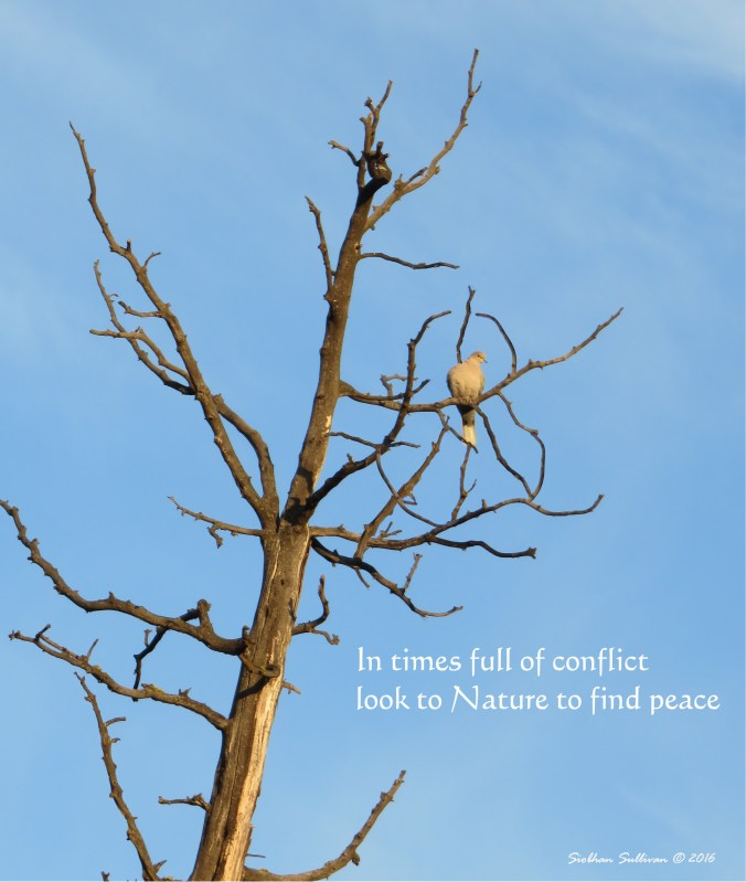 PeaceTree2 November2016 SiobhanSullivan