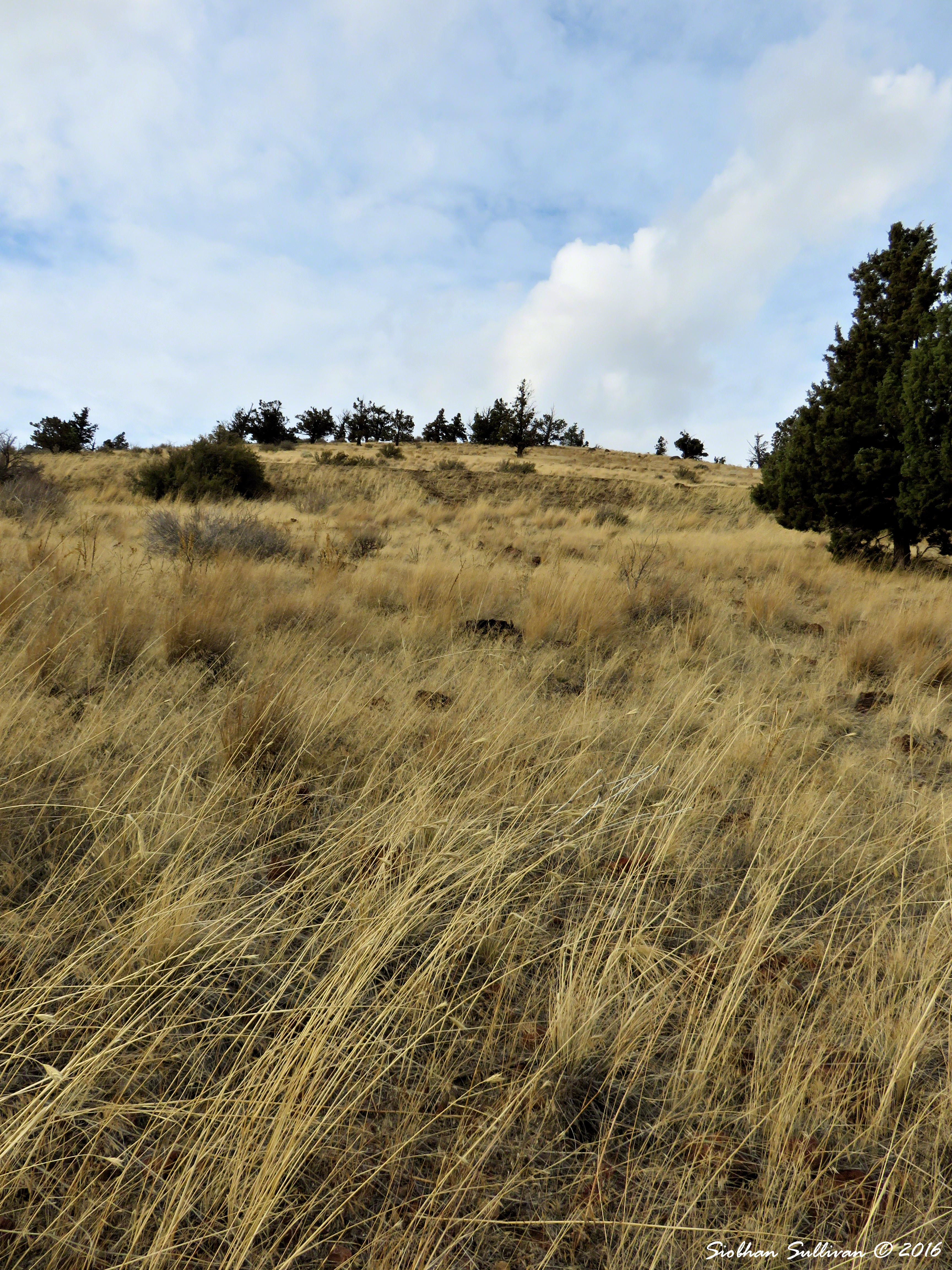 Looking uphill on Pilot Butte October 2016