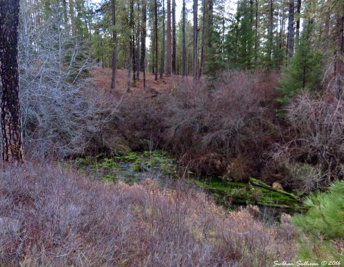 Metolius River Headwaters 27Nov2016