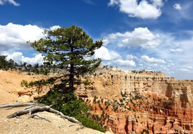 Bryce Canyon National Park, Utah 6May2017