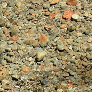 Rounded rocks in the Metolius River, OR 4June2016