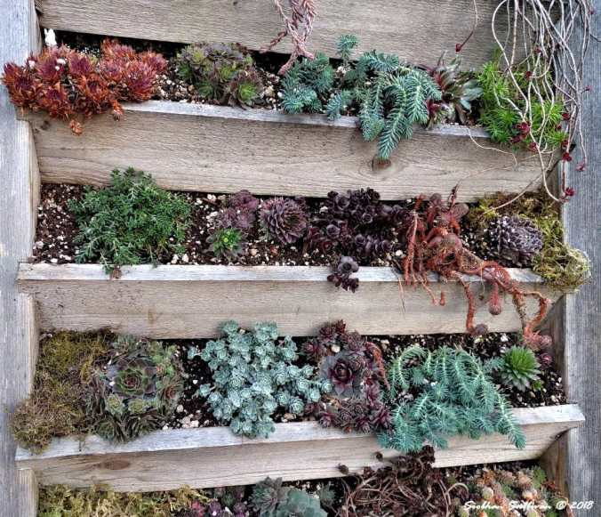 Succulent Wall in Bend, Oregon 27March2018