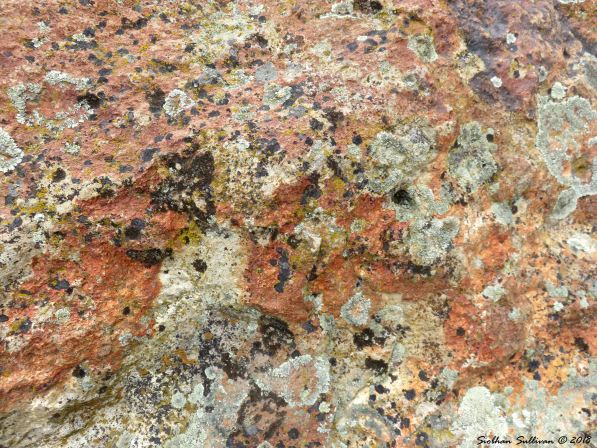 Colorful lichens at Clarno Palisades 8 15May2018