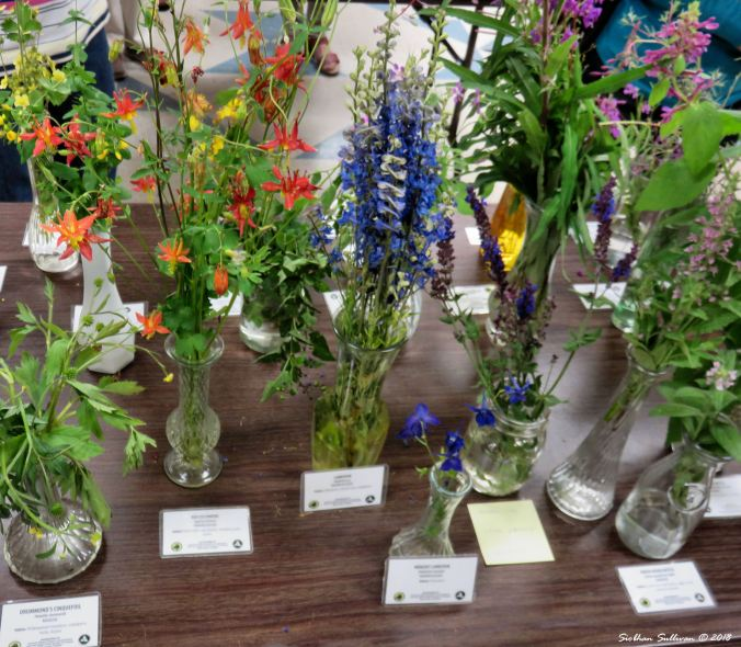 Wildflower Show at Sunriver Nature Center, Oregon 30 June 2017