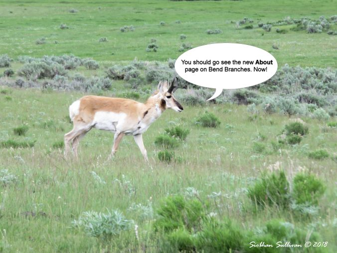 About page pronghorn sage 31May2018