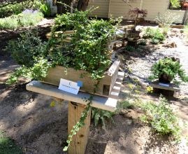 Outdoor bonsai, High Desert Garden Tour, Bend, Oregon 21July2018