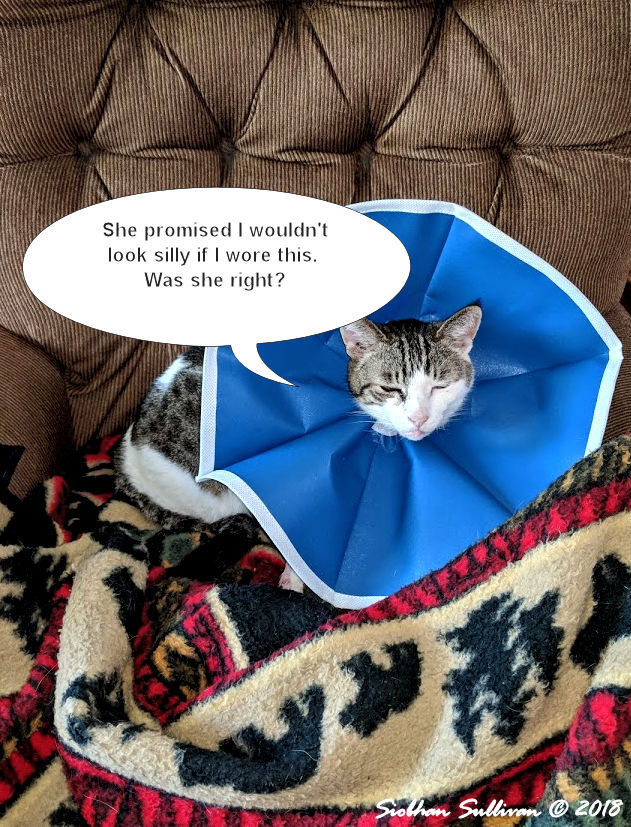Fun photos: My cat, Motor, recovering from his broken leg October 2018
