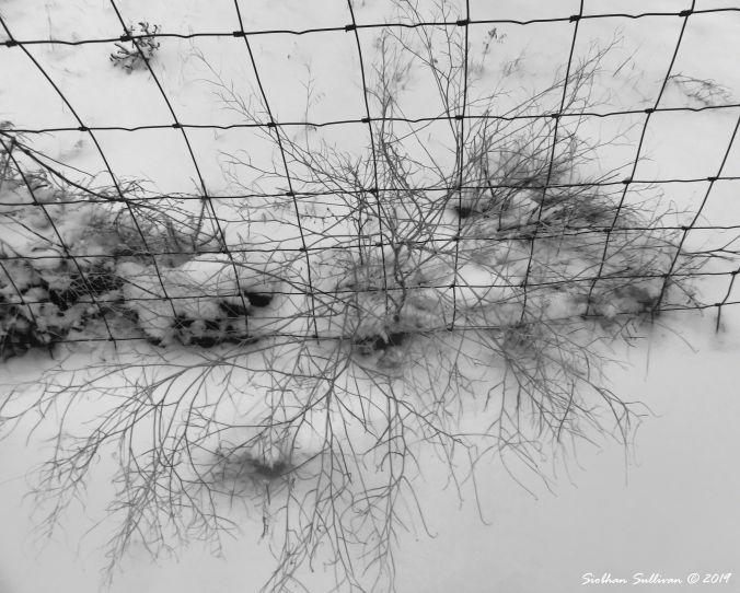 Tumbleweed in the snow 12February2019