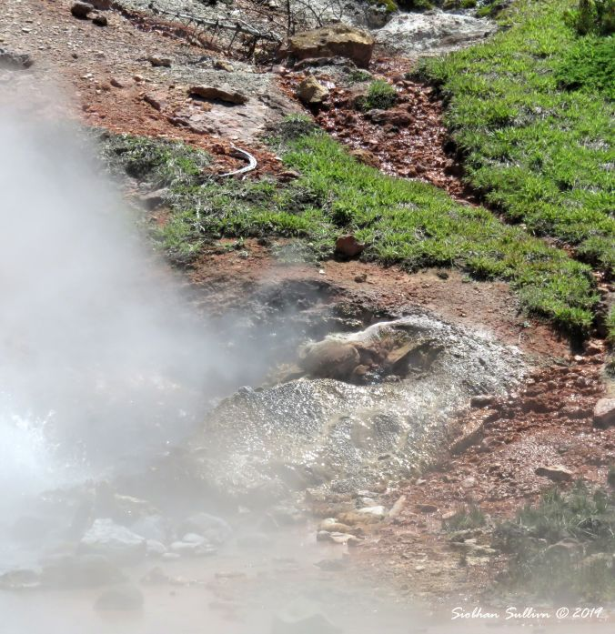 Yellowstone Elements - Near Blood Geyser, Artists' Paintpots 2June2018