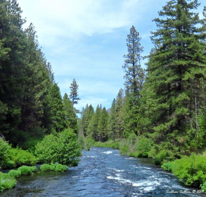 Metolius River, Oregon 4June2016