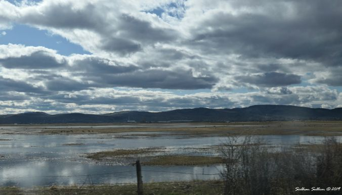 Birds of the shore in Harney County, Oregon 12April2019