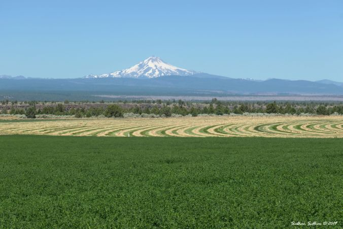 Mt Jefferson view from Culver, Oregon 19July2019