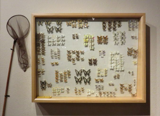 Butterfly collection, The Dalles, Oregon 16October2017