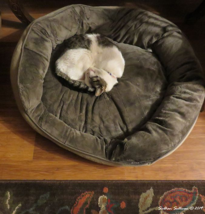 Peaceful pets. Cat asleep on a dog bed 13 June 2016