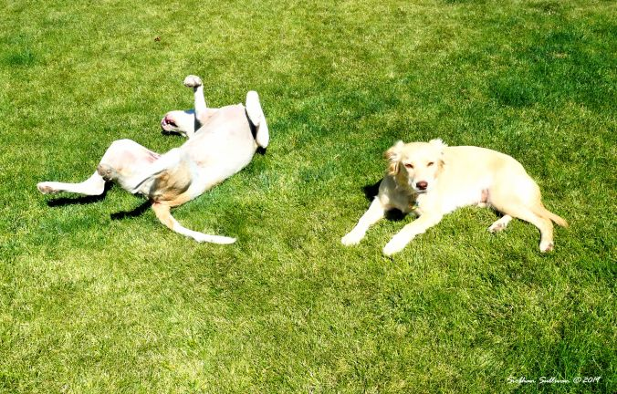 Two dogs resting on the grass