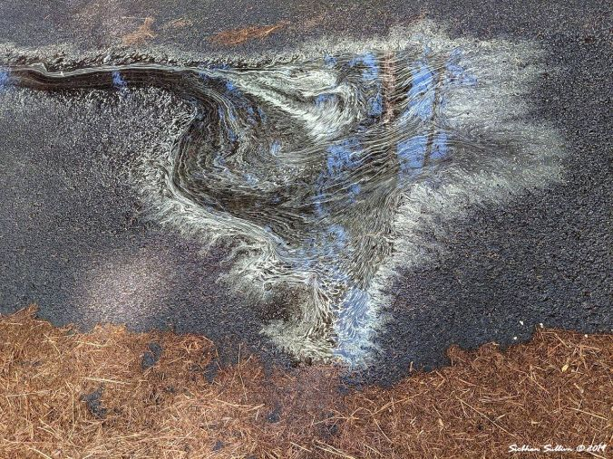 pollen painting in a puddle, Oregon May 2019