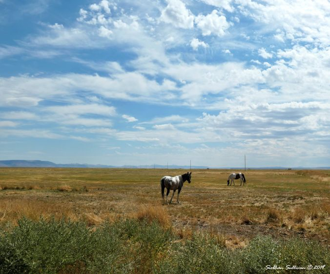 Horses near Steens Mountain, Oregon August 2019