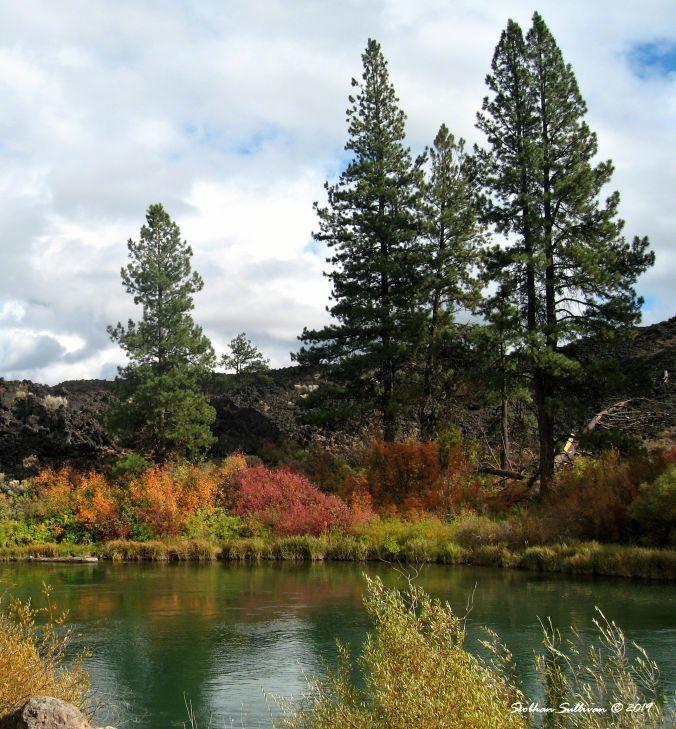 Fall's finery near Benham Falls, Oregon October 2014