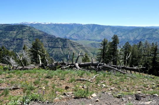 Hells Canyon view to the east 4 June 2019
