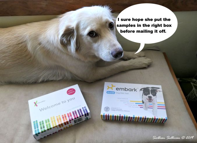Photo bloopers , dog in front of DNA kits July 2019