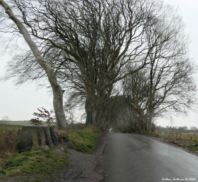 Dragon door from fallen tree, County Antrim, Northern Ireland 29 February 2020