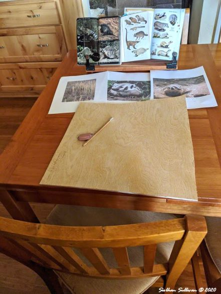Work space for drawing an American badger August 2020