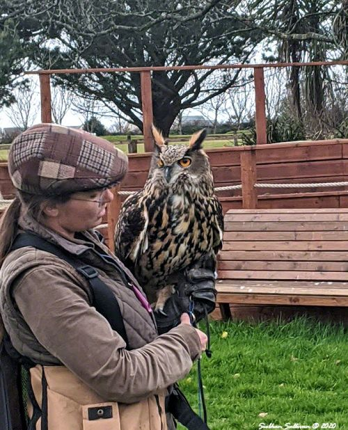 Guide at Dingle Falconry Experience Ireland March 2020