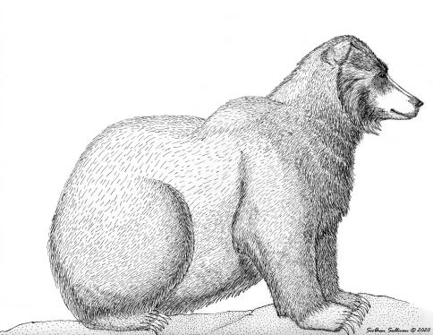 Grizzly drawings by Siobhan Sullivan. September 2020