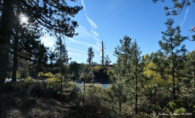 A pretty green scene in Oregon