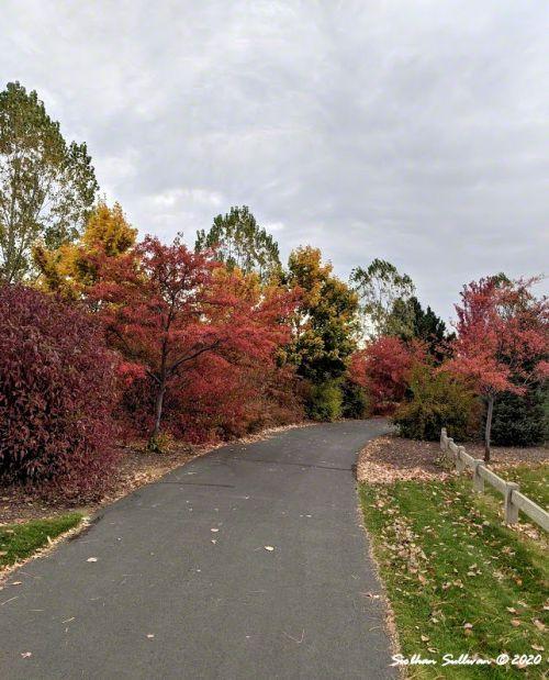 Pine Nursery Park fall color