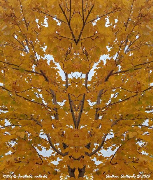 Golden fall leaves reflected image