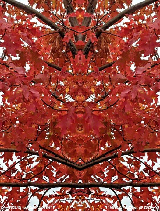 Red fall leaves reflected image