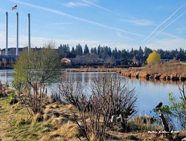 Spring walk Deschutes River