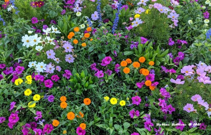 Flower border May 2020