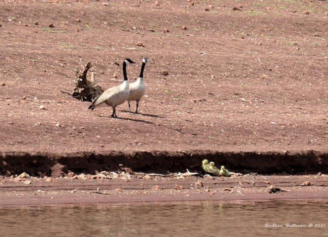 Birds at Prineville Reservoir