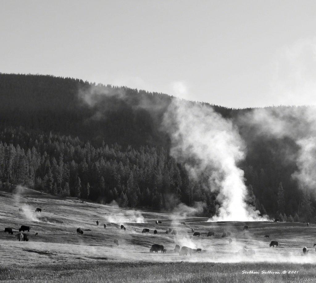 Steam-filled landscape with bison