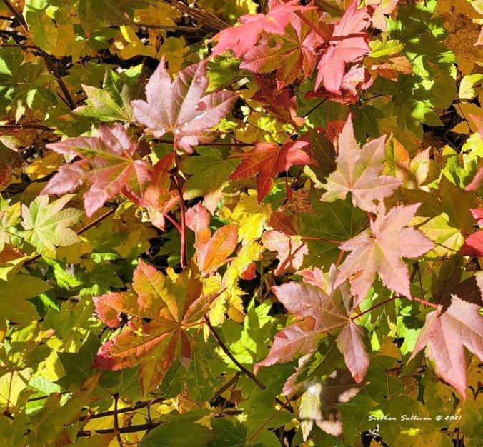 green leaves fluttering poem