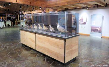 Sage Grouse exhibit
