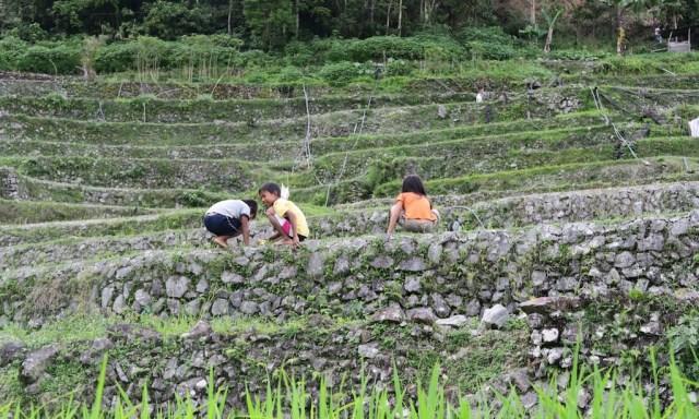 3 kleine Kinder spielen in den Reisterrassen von Hapao
