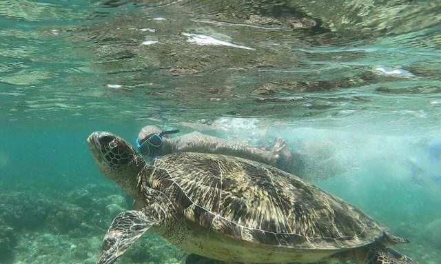 Turtlemania auf Apo Island. Bendja und Turtle