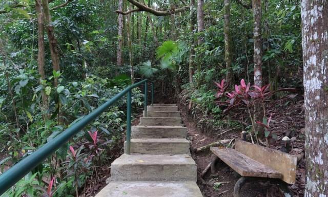 Eine Treppe die durch den Dschungel zum Aussichtspunkt des Mount Bandilaan führte