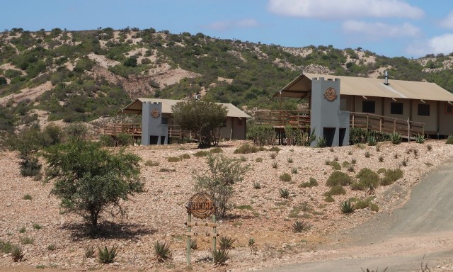 Zeltunterkünfte des AfriCamps Little Karoo