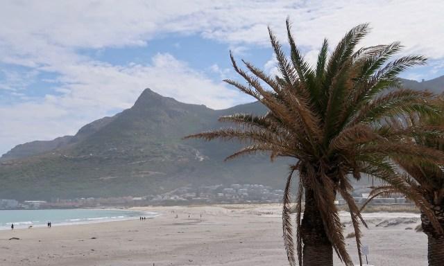 Der Strand in Hout Bay mit einer Palme im Vordergrund