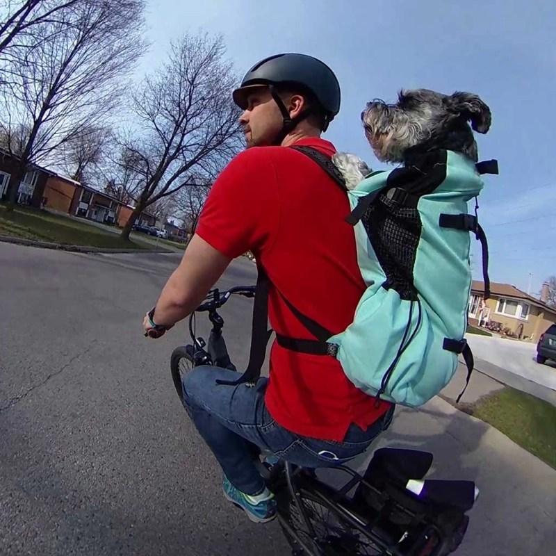 Kasper in k9 sport sack backpack on ben's back on bike