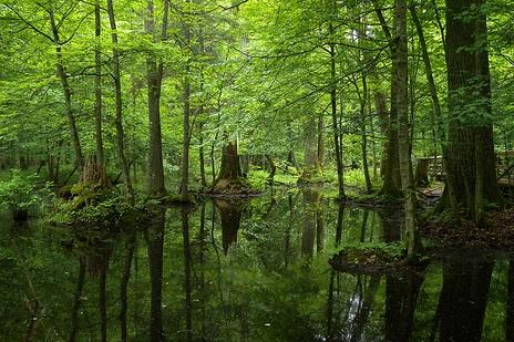 世界で一つフルオーダージュエリー妖精の住む森
