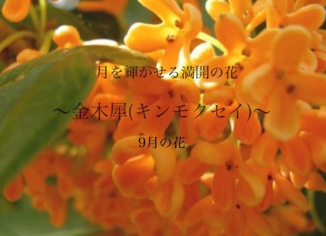 月に咲く花は女性に嬉しい効果あり ~金木犀(キンモクセイ)~ 9月の花
